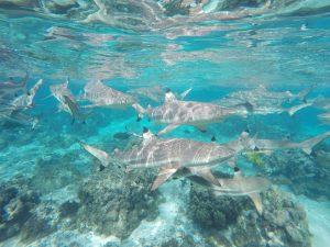 צילום של כרישים