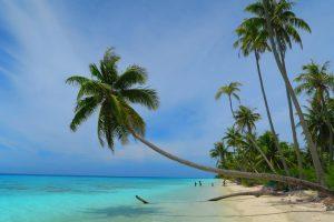 ים כחול דקלים על החוף