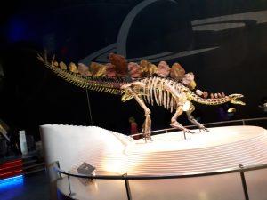 שלד של דיונוזאור