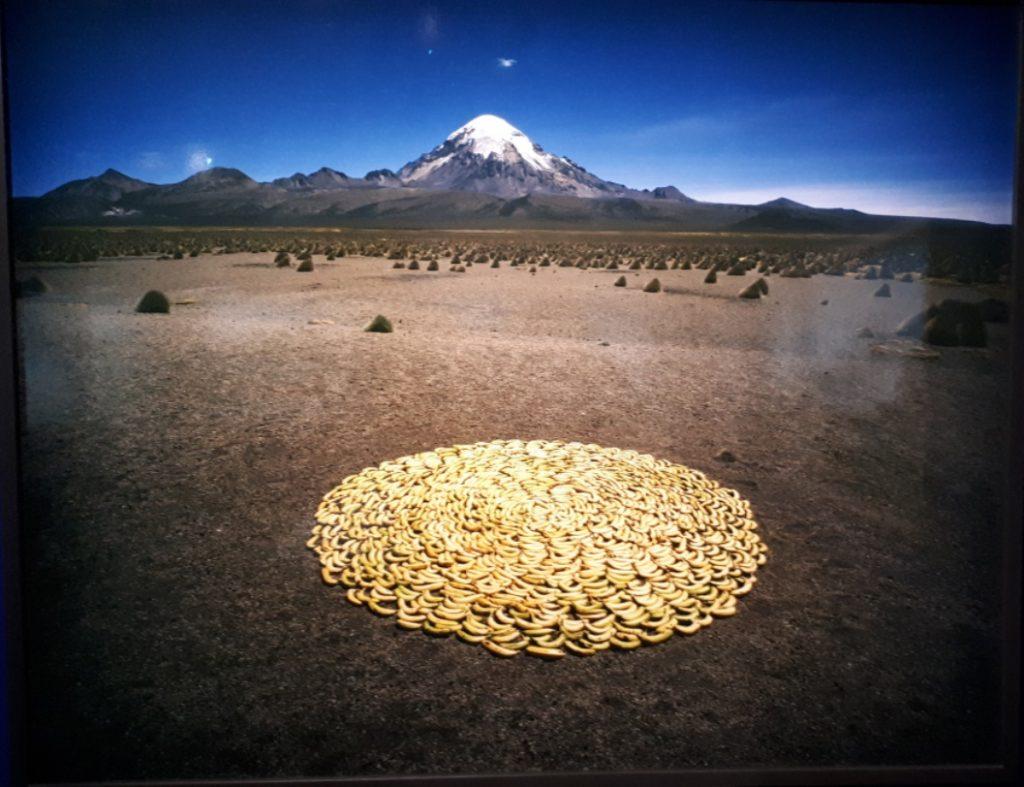 תמונת נוף עם מעגל בננות
