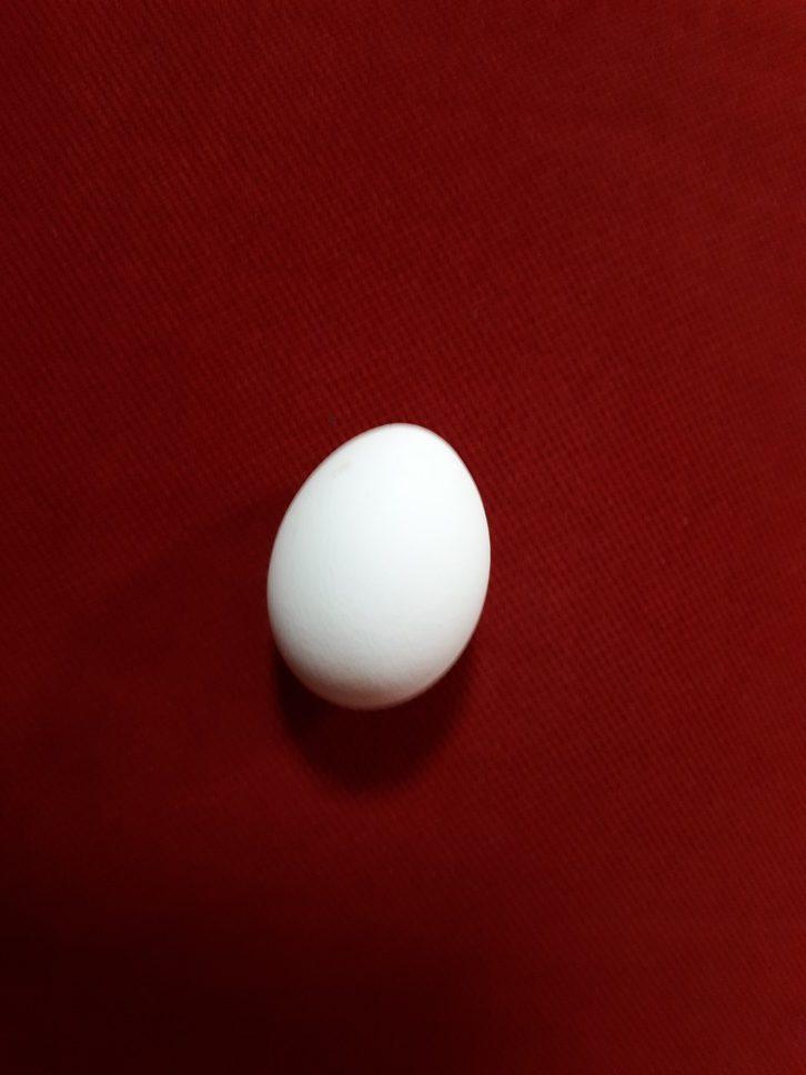 תמונה של ביצה