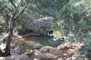 מראה של פינה בנחל